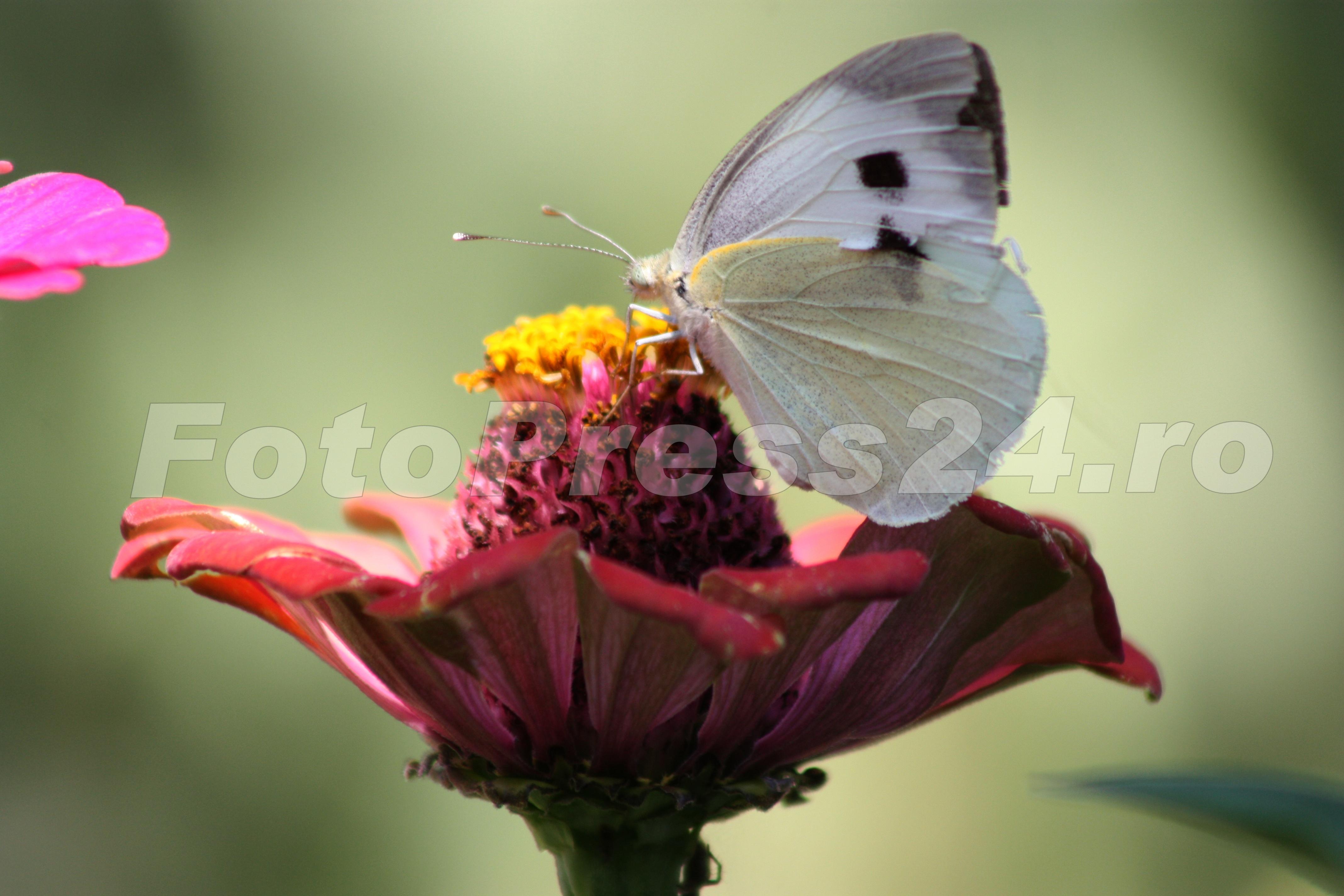 flori-FotoPress-24.ro-1
