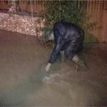 inundatii-arges (4)