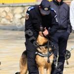 ziua_jandarmeriei-foto'mihai_neacsu-fotopress24 (3)
