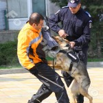 ziua_jandarmeriei-foto'mihai_neacsu-fotopress24 (30)