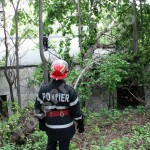 copac cazut-foto-Mihai Neacsu (10)