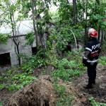 copac cazut-foto-Mihai Neacsu (11)