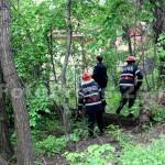 copac cazut-foto-Mihai Neacsu (4)