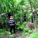 copac cazut-foto-Mihai Neacsu (5)