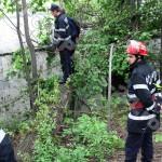 copac cazut-foto-Mihai Neacsu (7)