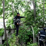 copac cazut-foto-Mihai Neacsu (8)