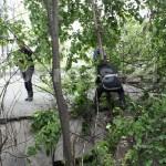 copac cazut-foto-Mihai Neacsu (9)