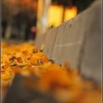 mihai_marian-fotopress24 (1)
