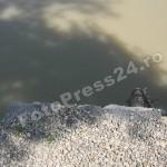 Lunca Argesului-FotoPress24.ro-Mihai Neacsu (10)