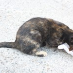 pui pisica infirm-foto -Mihai Neacsu (1)