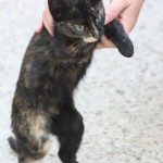 pui pisica infirm-foto -Mihai Neacsu (3)
