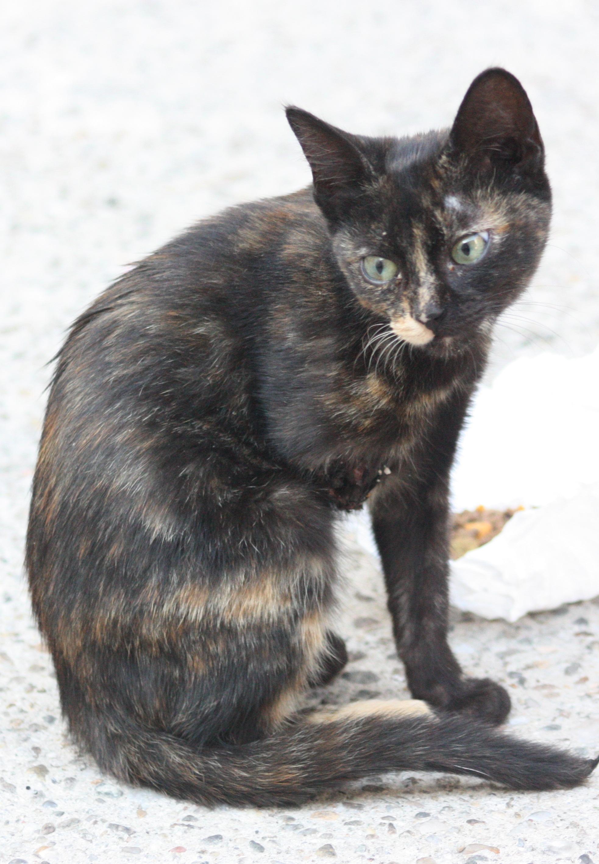 pui pisica infirm-foto -Mihai Neacsu (4)