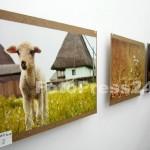 expo-arta-foto-Mihai Neacsu (18)