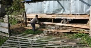 gospodarie atacata de urs Balilesti-fotopress24 (2)