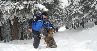 mix -cainele jandarmeriei montane  parang (4)