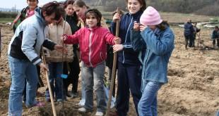 plantare pomi-fotopress24.ro