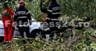 copac-cazut-peste-masini-fotopress24-28