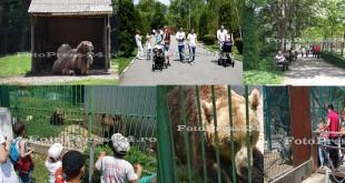gradina-zoologica-fotopress-24.ro-1-iunie
