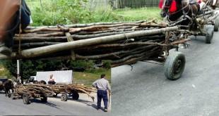 prinsi-cu-lemne-furate-2