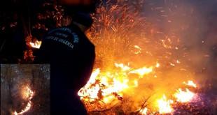 IncendiuPadureBeleti02