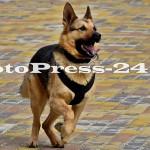 ziua jandarmeriei romane - fotopress24 (10)