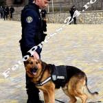 ziua jandarmeriei romane - fotopress24 (9)
