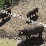 gradina zoo - 1 iunie pitesti (4)
