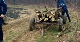 tăiere ilegală de arbori (1)