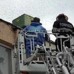 Roi de albine la un bloc din Piteşti (10)
