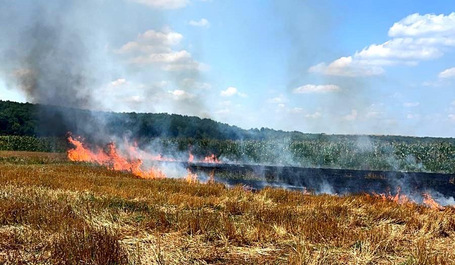 Incendiu de vegetație uscată în comuna Stolnici